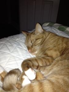 Scotch sleeping